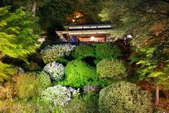 よいた「楽山苑」ライトアップ 2016